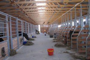 Pferdeboxen für eigene und Pensionspferde